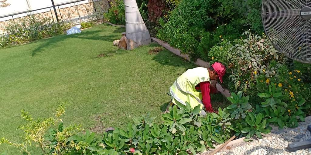 لاند سكيب تنسيق حدائق برجوله خشب شلالات عقود صيانة توريد و تركيب نجيلة طبيعية