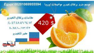 اسعار البرتقال في محطات التصدير