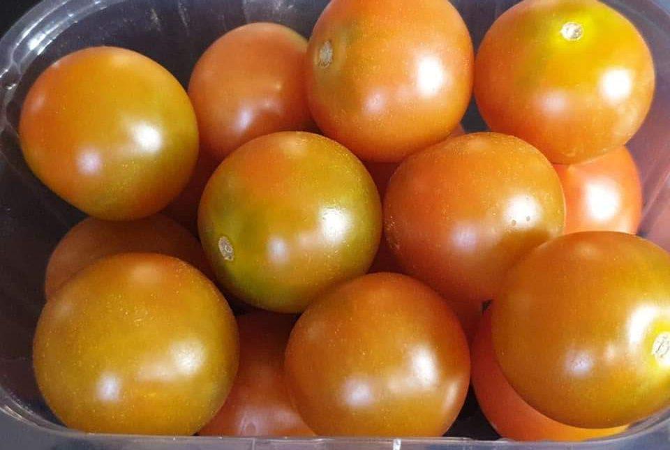 محطات فرز الطماطم و الطماطم الشيري (24)