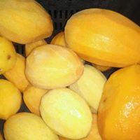import frozen mango slices export frozen mango slices استيراد مانجه شرائح مجمده تصدير مانجه شرائح مجمدة